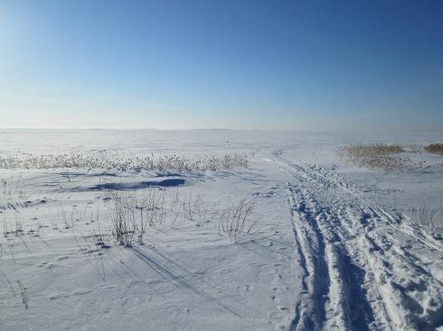 nallikari frozen ocean